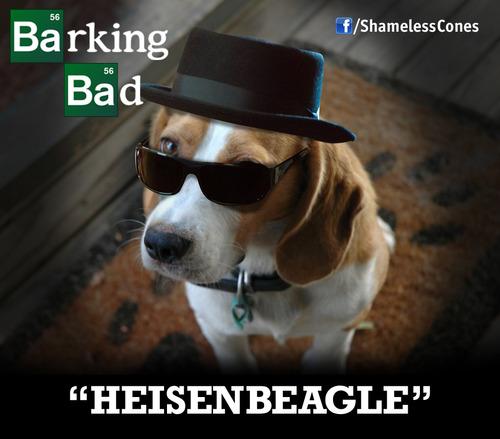 beagle breaking bad